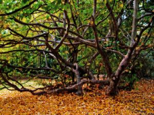Autumnal leaves under the tree