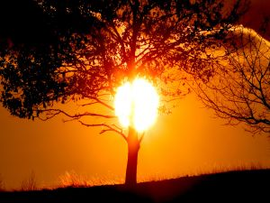 A tree and sun