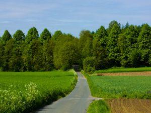 Road toward the trees
