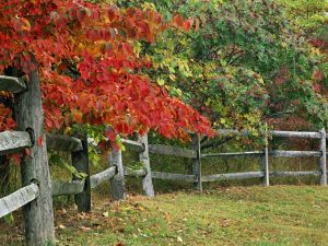 Trees next to the wooden fence