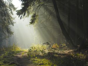 Light in the inside of forest