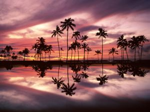 The reflection of palms