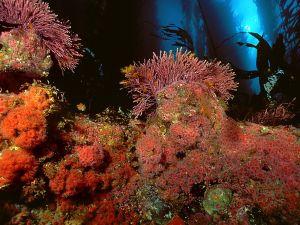 Marine vegetation