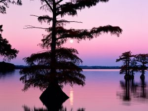 The moon over Reelfoot Lake, Tennessee