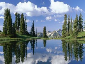 Pine trees and clouds reflected in the lake