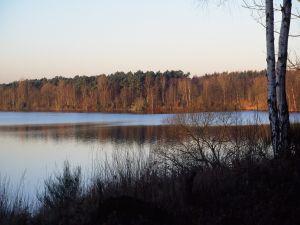 Grove next the lake