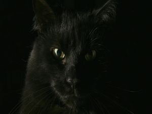 Black cat in the dark