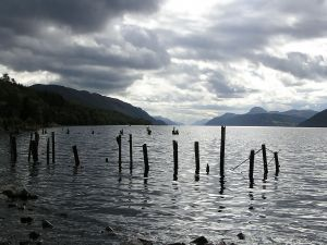 Sticks in the lake