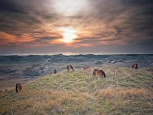Horses on grass at sunset