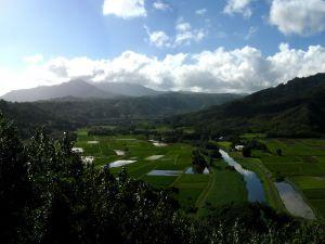 Farmland with water