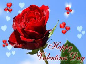 """Card with a rose """"Happy Valentine's Day"""""""