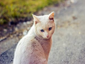 Cute cat sitting on the road
