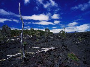 Trees on black ground