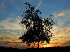 Tree and sky at sunrise