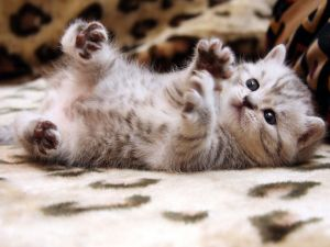 The four paws of kitten