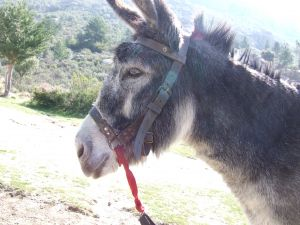 The donkey of Pedriza