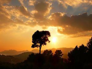 Sunrise in nature