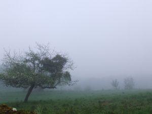 Fog between trees at sunrise