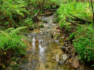 Ferns and stones in river