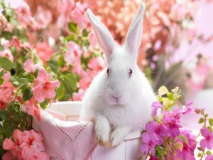 White rabbit between pink flowers
