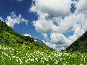 Flowers on green meadow