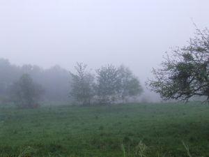Fog at sunrise in Asturias (Spain)