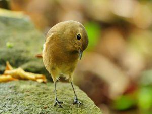 Birdie over stone
