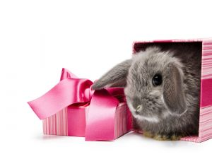 Bunny in a gift box