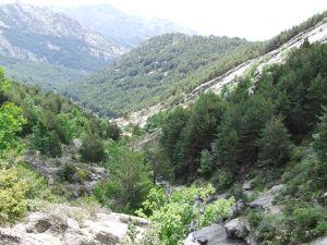 Trees in La Pedriza (Madrid, Spain)