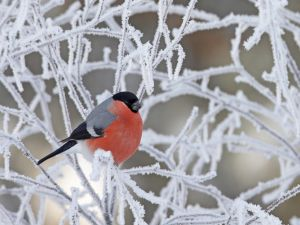 Bird in the icy branches