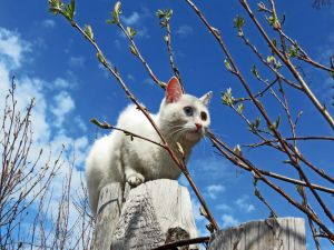 White cat walking on some trunks