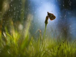 Rain drops over butterfly