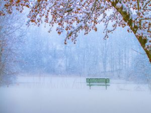 Snow falls on a lonely bench