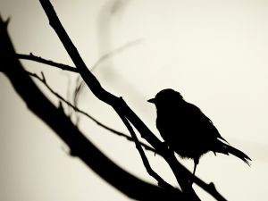 Bird in shadow