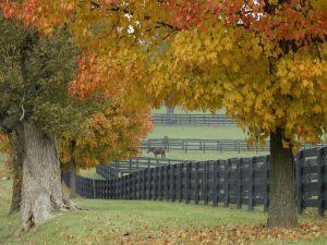 Big trees next at farm
